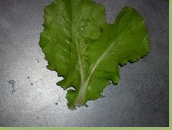 05-17-08_Siamese Lettuce (2)