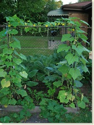 09-02-08_Cukes, Sweet Potatoes, Turnips, Collards