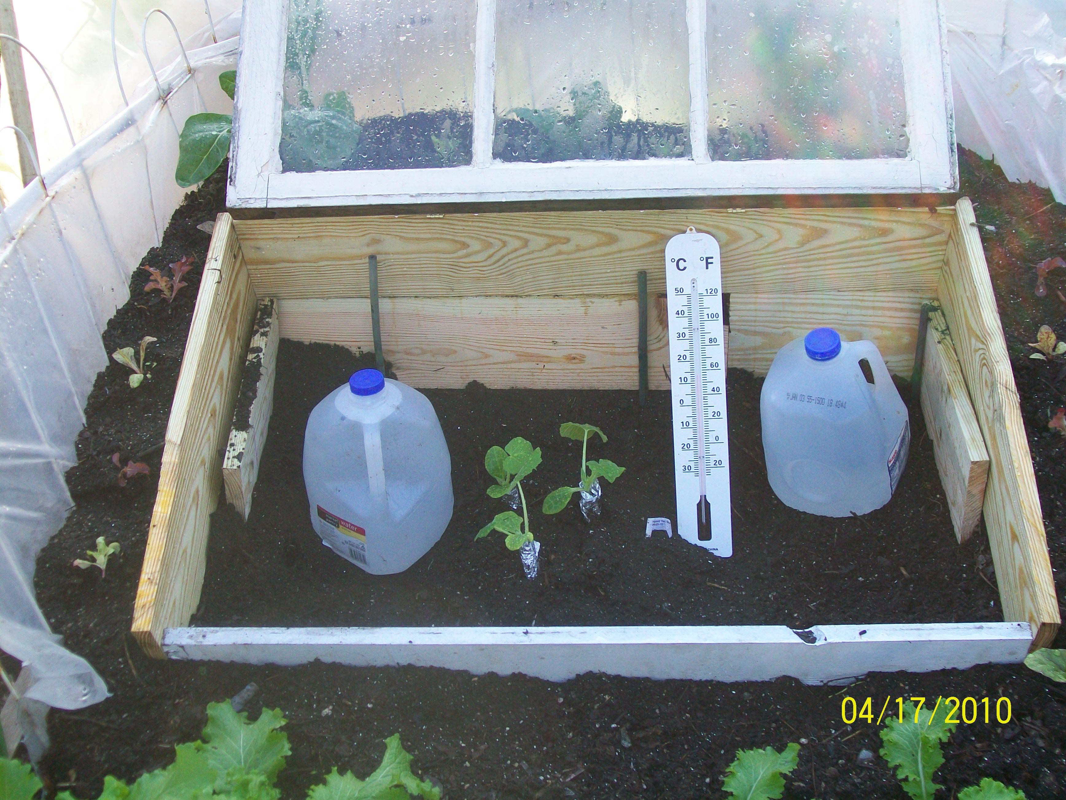 Gardening Experiments   Cheryl\'s Garden Goodies