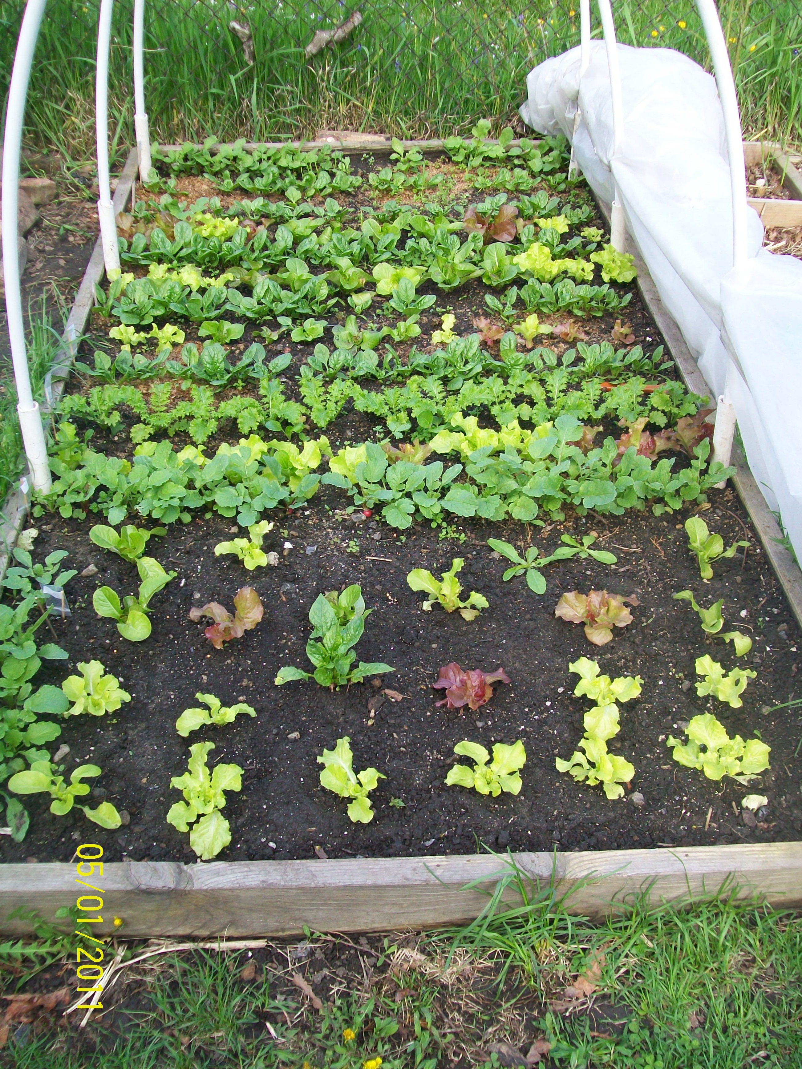 how to keep bugs off lettuce in garden